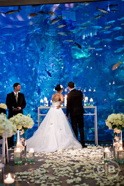 Would have never thought of an aquarium as a wedding venue, the photos would be amazing :D