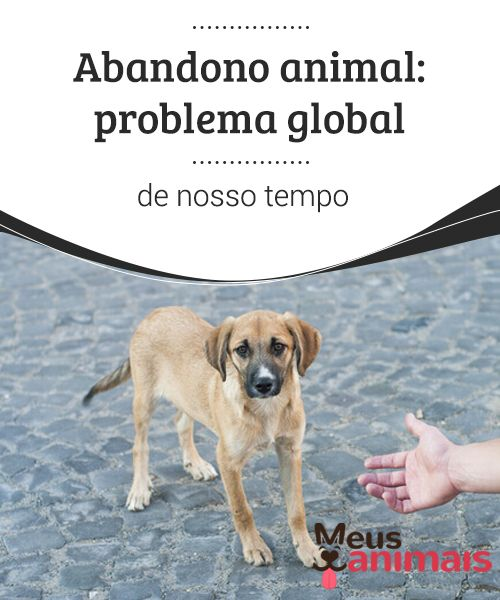 Abandono: problema global  Infelizmente, os números nos mostram como o abandono animal, no mundo inteiro, é um grave problema de nossos dias.