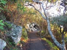 Burleigh Headland National Park