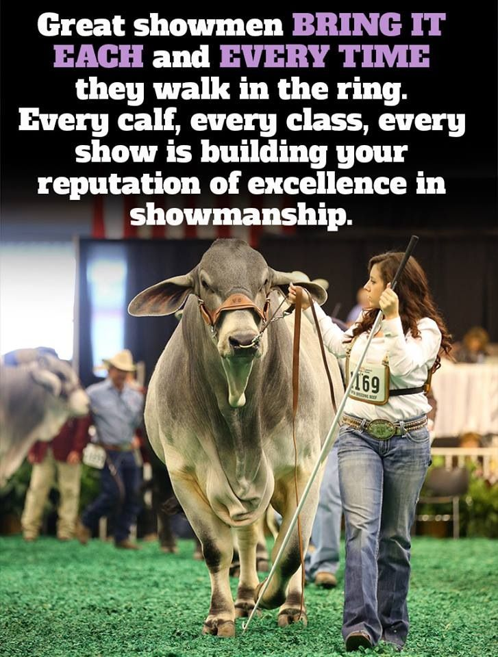 A good showman is the most important part of showing livestock.