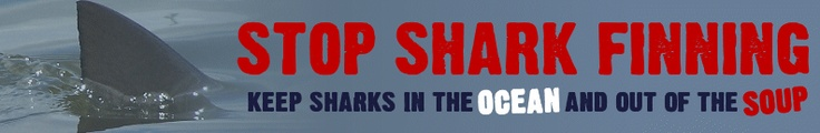 Shark finning is a cruel, inhumane practice that is threatening many shark species and the biodiversity of our oceans. 70 million sharks a year are being killed for a bowl of shark fin soup!