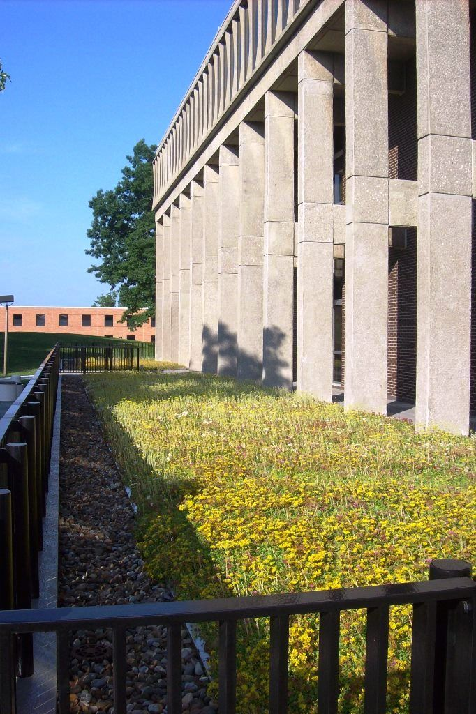 Braun & Steidl Architects : Finished Product- Taylor Hall Plaza Deck Vegetative Roof System at Kent State University.