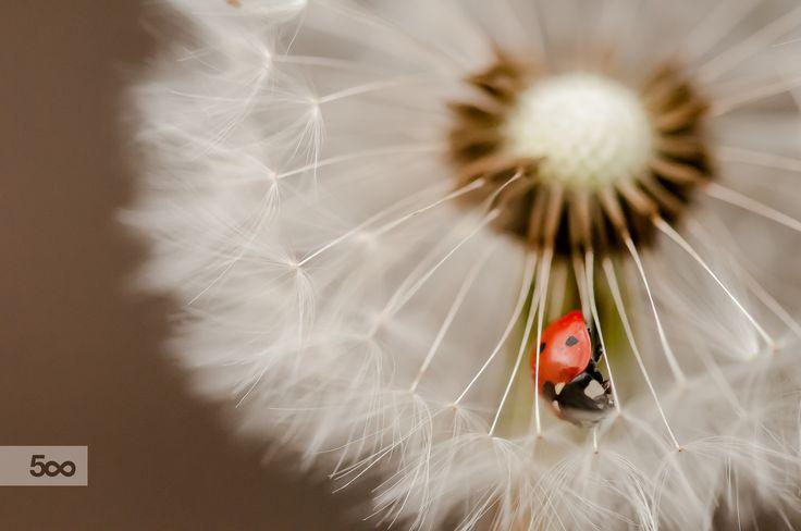 FLUFF by Graziella Serra Art & Photo on 500px