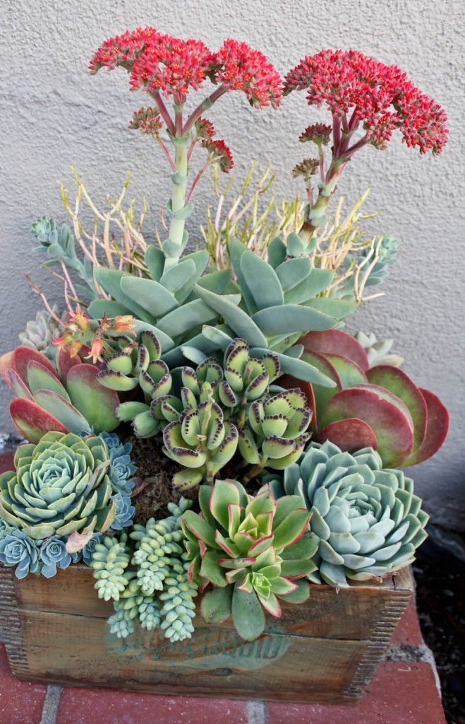 Mixed succulent bowl