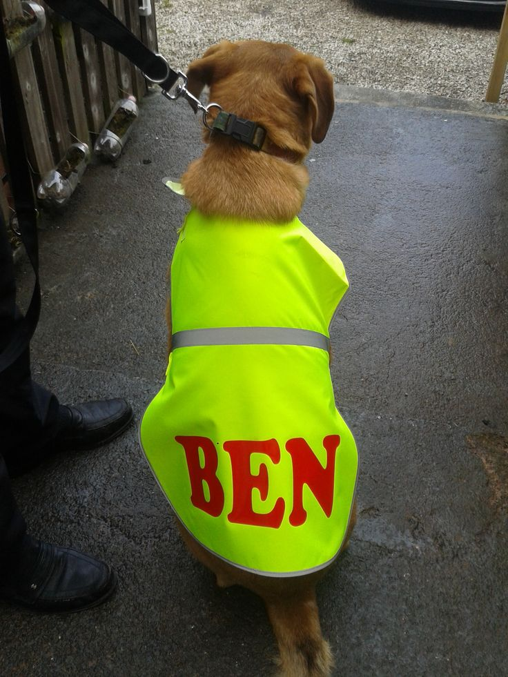 Personalised reflective dog jacket from Miteamshirts