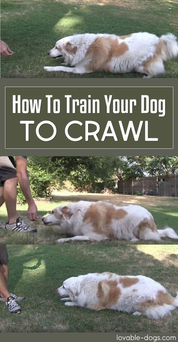Basic Obedience Training For Dogs Help Is Here Training Your
