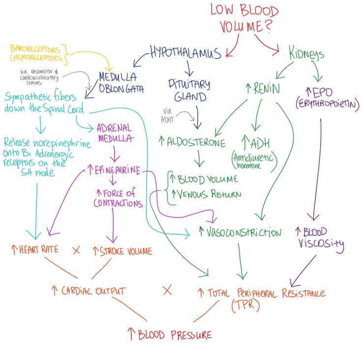 anatomy and physiology of hypertension Human physiology/the cardiovascular system from wikibooks hypertension hypertension or high essentials of anatomy and physiology, valerie c scanlon and tina sanders tortora, g & grabowski, s (2000) principles of anatomy & physiology.