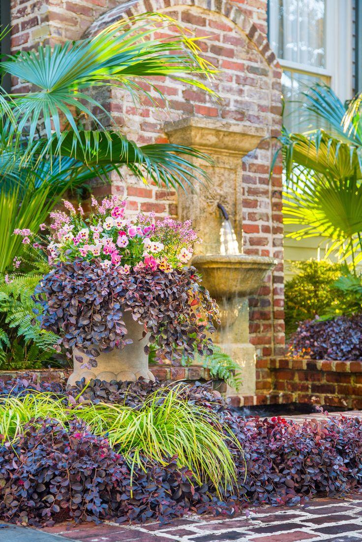 230 best landscape-plant's for the landscape images on pinterest