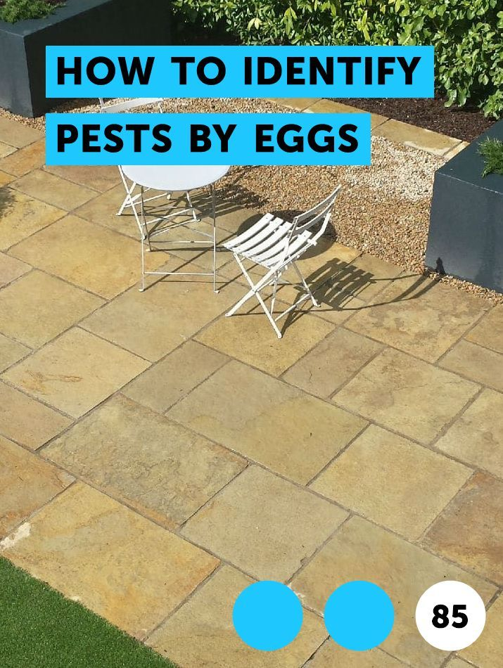 How to Identify Pests by Eggs | Pests, Weeds & Problems