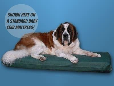 Standard Baby Crib Mattress Canvas Dog Bed Cover by Bow Wow Beds. You can find the mattresses like new on consignment at a great price! We like to use the Precious Angel (high density foam) by Safety 1st which has a non-allergenic, thermo-bonded inner core providing firm support for our Dane.