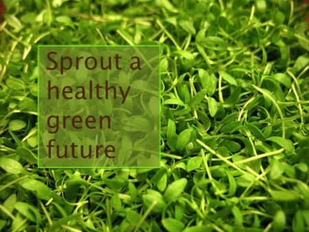 Sprout a Green, Healthy Future...On Your Countertop Thrifty & Green ...