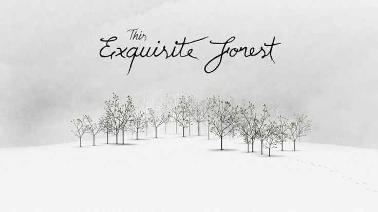 """Tomorrow Awards Fall 2012 Winner! """"This Exquisite Forest"""" by Google Creative Lab"""