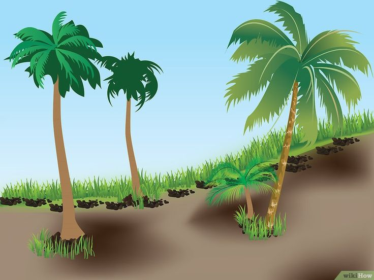 planter un palmier gardening planter un palmier. Black Bedroom Furniture Sets. Home Design Ideas