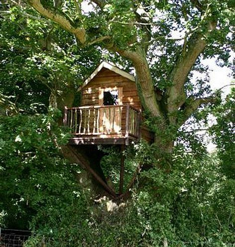 1000 ideas about simple tree house on pinterest tree for Simple tree fort ideas