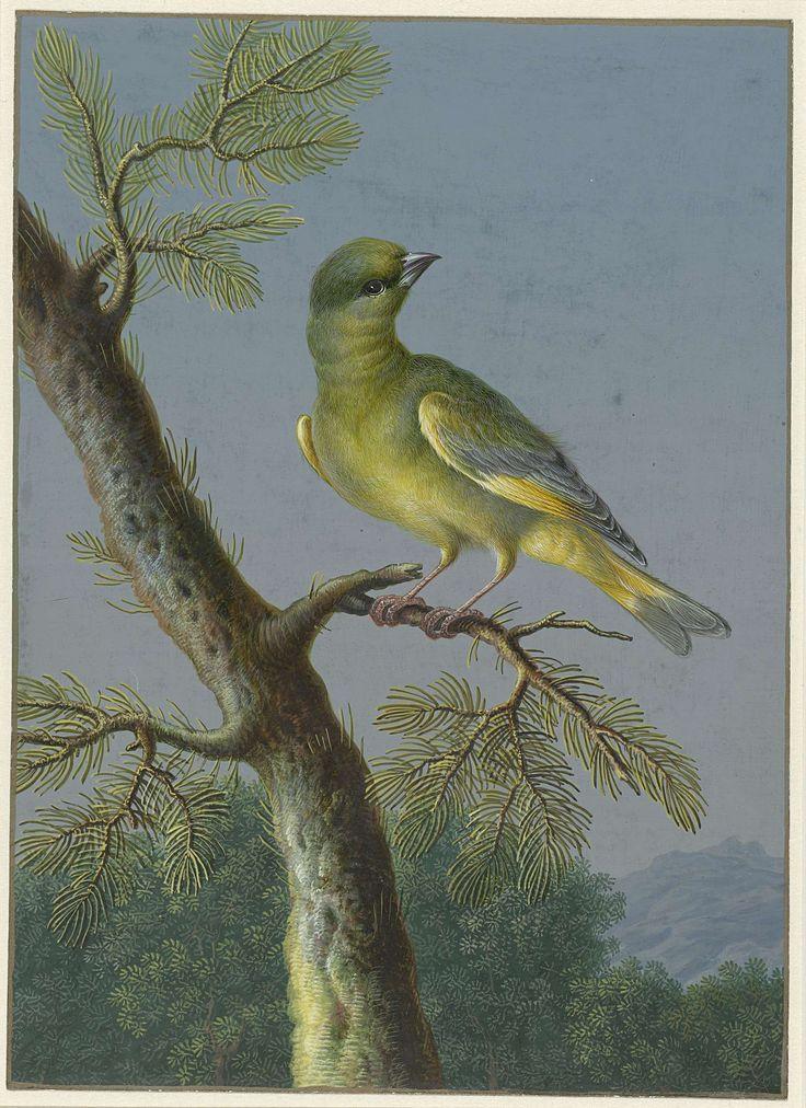 Groenling, Barbara Regina Dietzsch, 1716 - 1783