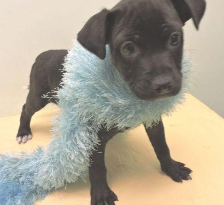 Introducing Willington Beaglepug Petfinder Adoptable In 2020 Adoptable Beagle Pet Finder Beagle Dog