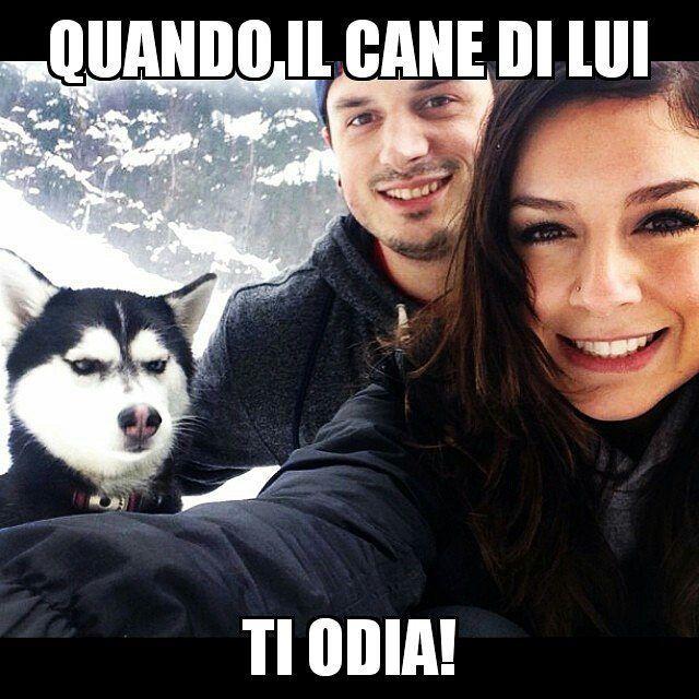 """""""Mi piace"""": 19, commenti: 1 - MOLLA L'OSSO (@molla_losso_catania) su Instagram: """"#dogs🐶 #catania #sicily #italiangirl #husky #bestfriend #funny #meme"""""""