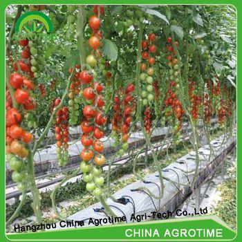 Indoor hydroponics growing system