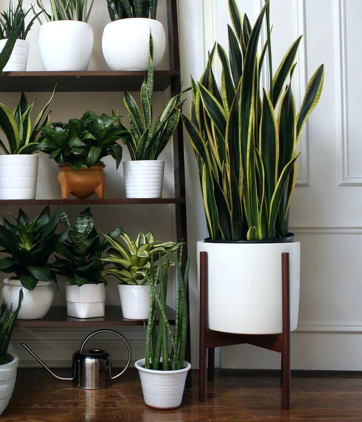 Plants In Creative Plant Pots