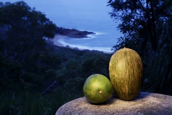 two melons with a view