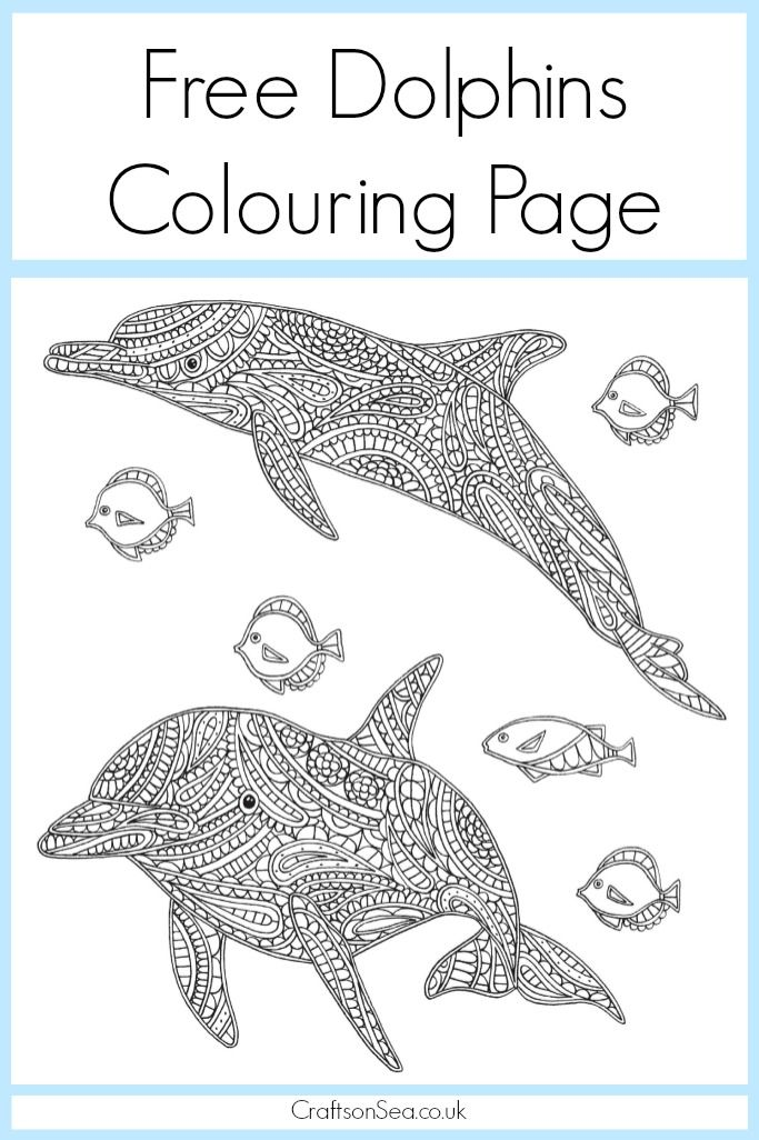 free dolphin colouring pagejpg 6831 026 pixels