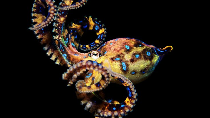 """""""With its distributed brain, the Octopus is like the internet, whereas we humans are stuck with individual CPUs."""""""