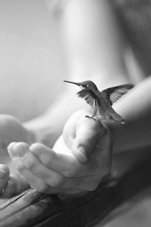 Black and white Bird on ladies wrist - ☯ www.pinterest.com/WhoLoves/Black-White ☯ #black #white #art