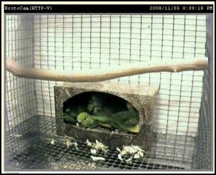 Diy Budgie Nesting Box Bird Houses Parakeet Toys Diy