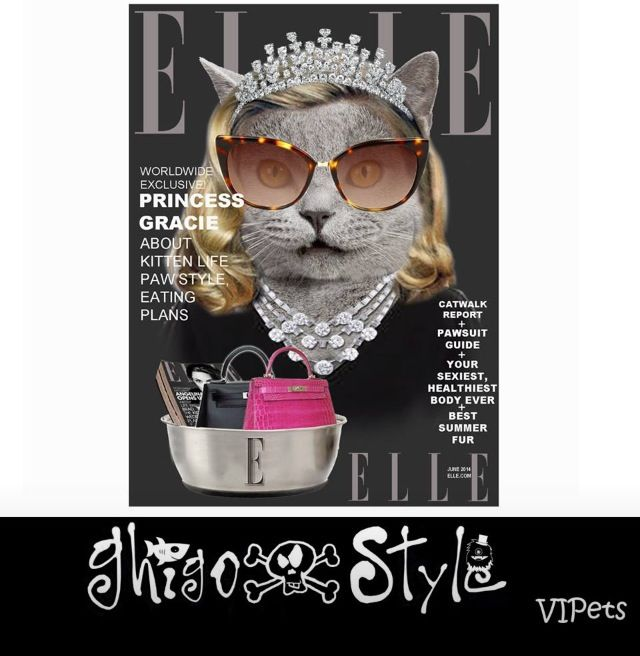 Gracie kitty is the Elle US cover star... As her owner is one of the assistants for fashion...
