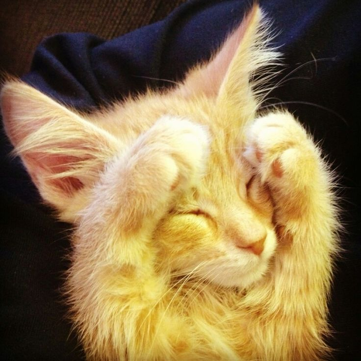 Please, I'm too young to hear those growls and hisses... | Animals ...