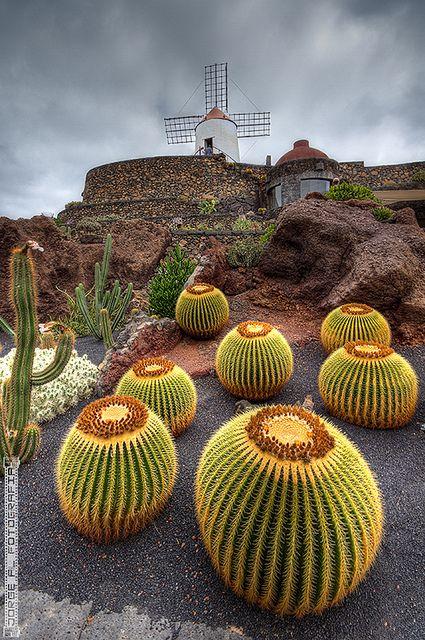 Jardín de cactus en Lanzarote, Islas Canarias