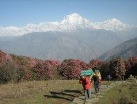 View from Ghorepani Poon Hill during ABC Trip.. http://www.nepalmotherhousetreks.com/abc-trekking-through-poon-hill.html