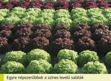 A levélzöldségek szerepe a korszerû táplálkozásban