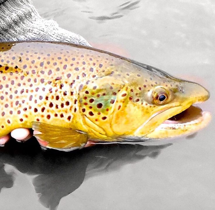 orvis fly fishing instructional videos