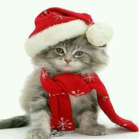 Diamond kitty merry christmas