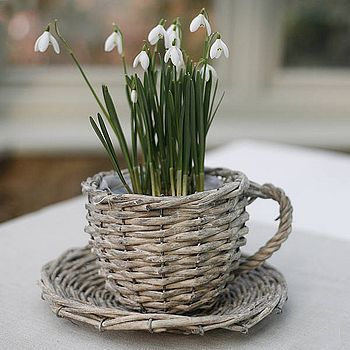 ¡Las ideas pueden ser infinitas! - taza usada como florero y plato hechos de mimbre