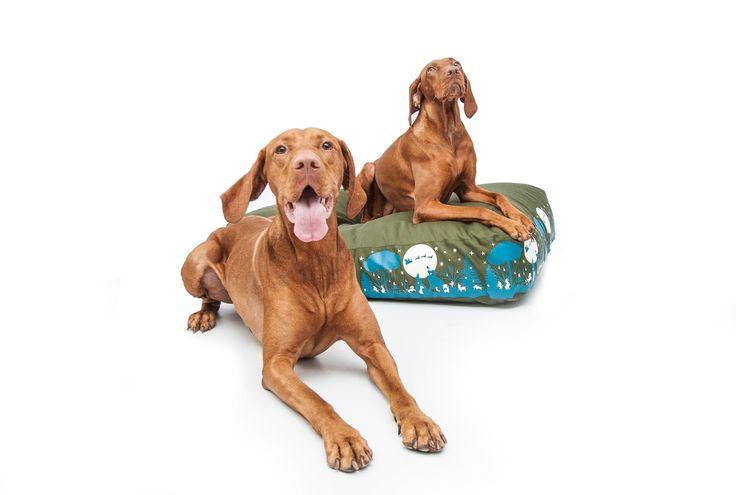 http://petbag.hu/2013-08-08-21-55-57/2013-08-08-21-56-40/kutyafekhely-petbag-m-cube-tel-kutyafekhely-detail