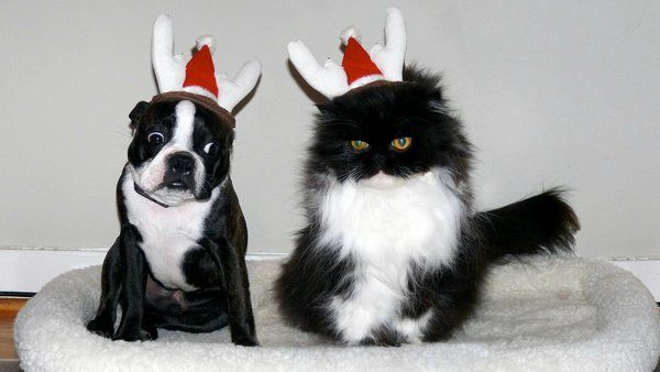 These dogs are on Santa's naughty list this year. Dog shaming is funny. These dogs are getting coal in their stocking.