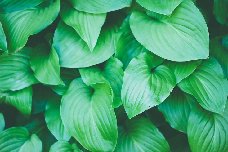 The secret language of plants   Love Nature