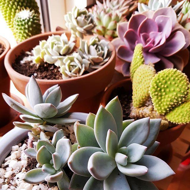 La Petite Collection De Plantes Grasses Du Blog Esprit Laita