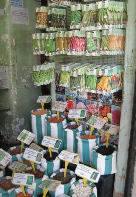 Seeds of every size in every shape and colours at Hortelao shop in Rossio Square