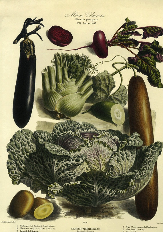 206 best Legume images on Pinterest Botanical prints Vegetables