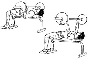 Barbell Bench Press Chest Muscle Gainer Exercises to Build Muscle Fast