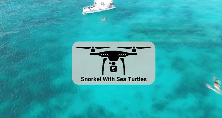 Let's go soaring over warm clear waters and diving in to swim with sea turtles off Barbados