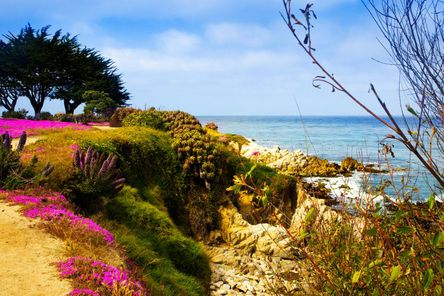 Monterey, Carmel and 17-Mile Drive Day Trip from San Francisco - San Francisco | Viator