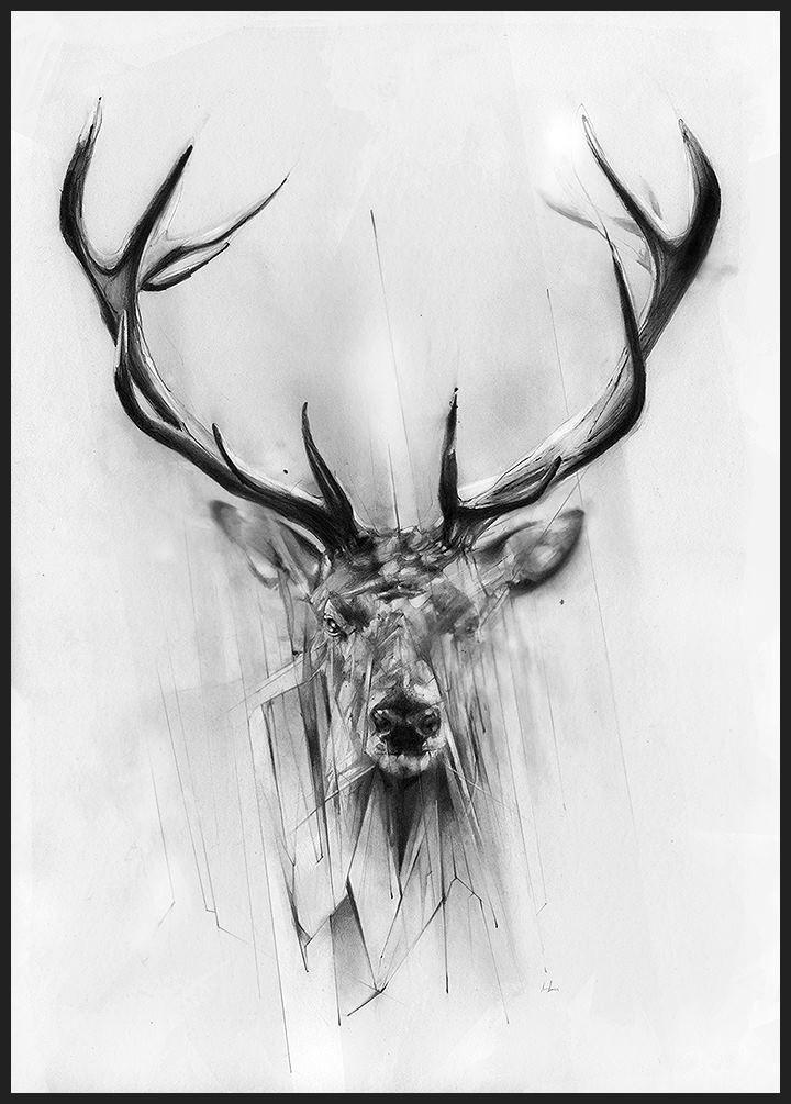 Deer  By alexis Marcou
