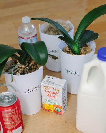 Feeding Plants Experiment   Education.com