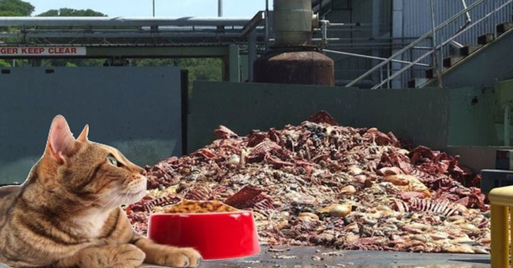 Top 10 Worst Dry Cat Food Brands For 2017