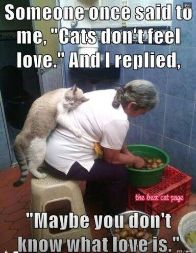 Although they'll likely deny it most of the time......cats definitely feel love.