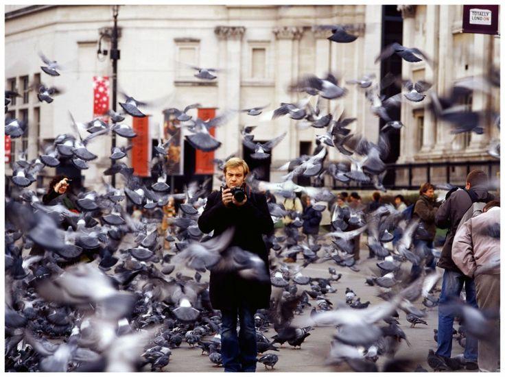 http://cherinefahd.com/cms/w/pigeons.jpg